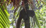 Außerdem wimmelt es von Palmhörnchen, die aber nicht so fixiert auf Tüten und Taschen sind.